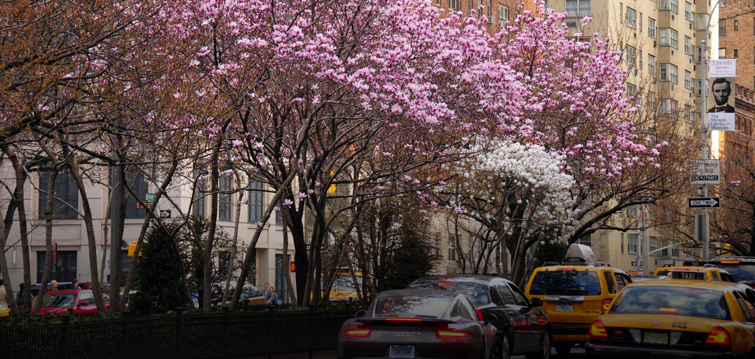 Moving to Murray Hill Park Avenue