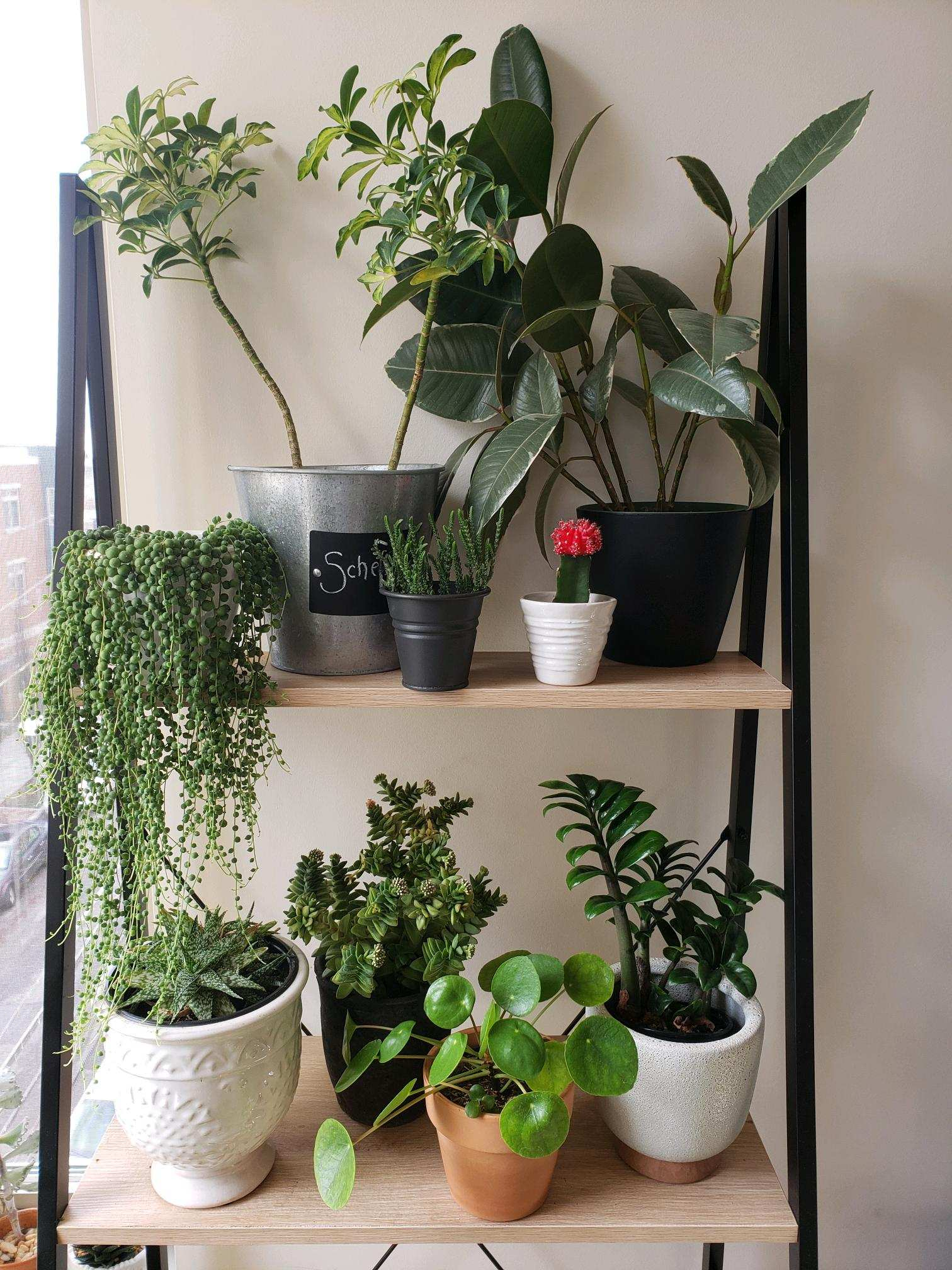 How to move with plants in NYC