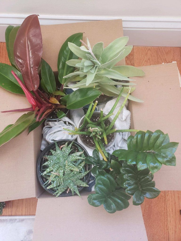Plants packaged in an open top box for transport