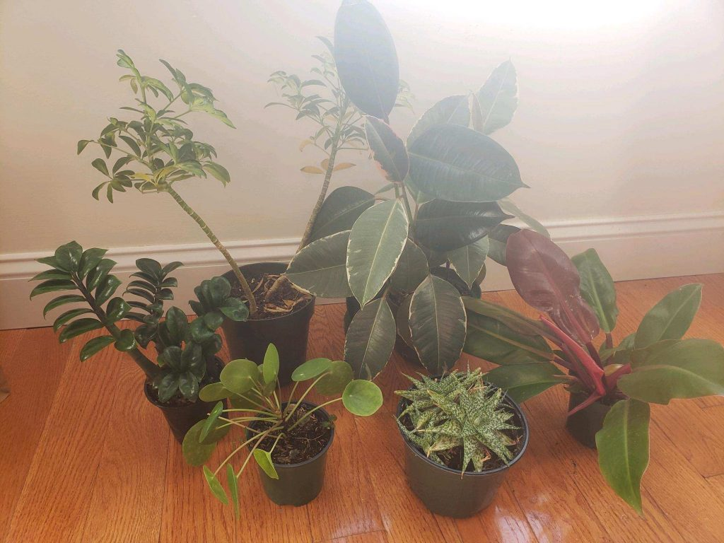 To give your plants the best care, plan to move them on your own